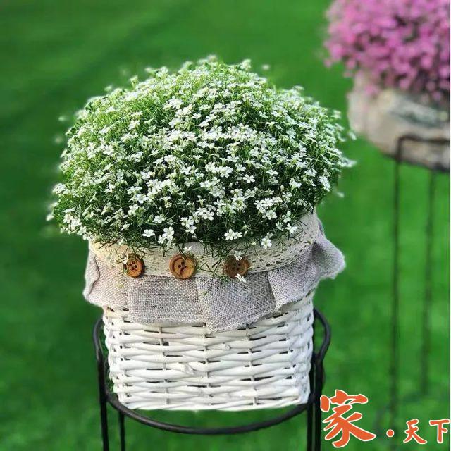 家庭花园,私家花园,花圃设计,庭院景观,别墅花园,室外设计,客厅装修,庭院花园,庭院种植,庭院绿植