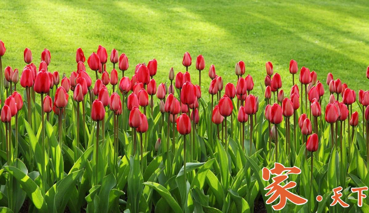 家庭绿化,庭院绿化,花园设计,前院设计,室内装修,阳台装修,庭院种植,园林绿化,花圃设计,庭院规划, 花园改造