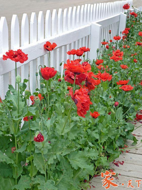 花园围墙,庭院围栏,家庭绿化,景观公司,家庭花园设计,私家花园,私家花园设计,私人花园,别墅花园,庭院景观设计