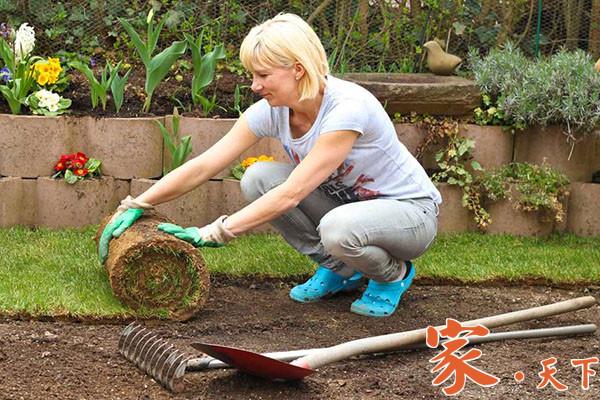 庭院草坪,铺草坪,铺草皮,家庭花园,庭院绿化,后院草坪,庭院绿植,庭院种植,后院排水,景观花园