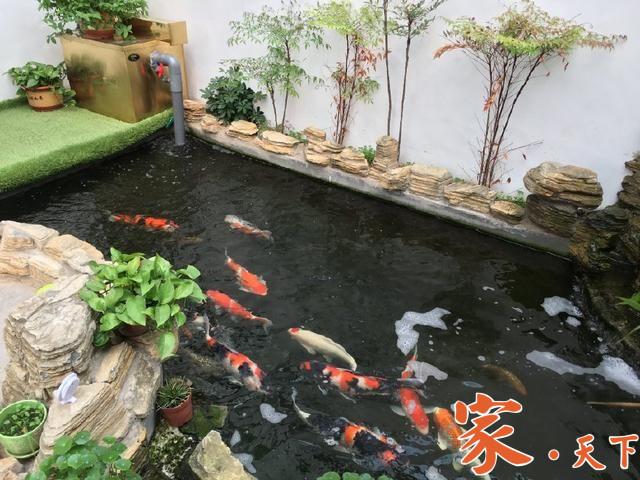 庭院设计,庭院鱼池,锦鲤鱼池,假山鱼池,庭院池塘,后院鱼池,美国花园设计,别墅装修,豪宅装修,室外装修