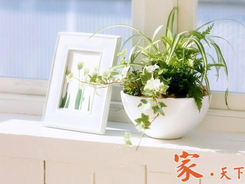 家庭养花,养花禁忌,别墅花园,室外设计,家庭花园,庭院景观,庭院绿植,庭院花园,私家花园,花圃设计