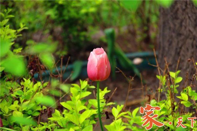 室内装修,卧室装修,家庭花园,私家花园,花圃设计,别墅花园,客厅装修,庭院花园,私人花园,花园设计