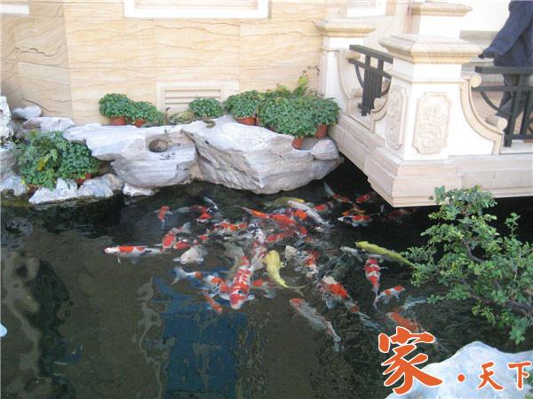 美国庭院设计,假山鱼池,别墅装修,豪宅装修,庭院装修,后院鱼池,庭院池塘,美国花园设计,人工瀑布,家庭泳池