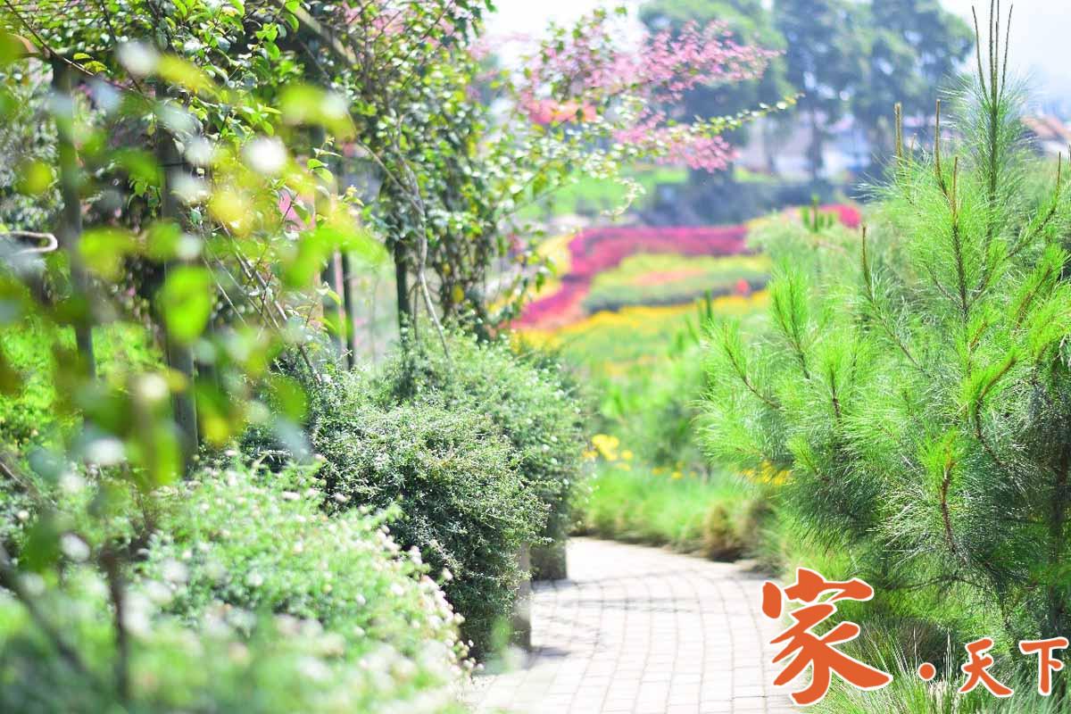 美式庭院景观,植物配置方案:美式新古典主义风格 后工业时代 乔木花卉 常綠灌木 观赏特性