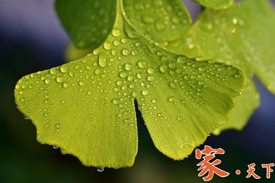 纽约装修,庭院设计,庭院景观,景观植物,室外装修,庭院装修,景观设计,庭院绿化,家庭绿化,庭院绿植